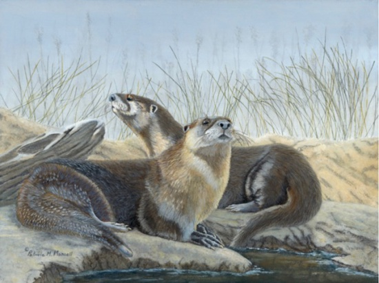 River's Edge (River Otters)
